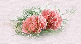 www.kute-group.blogspot.com